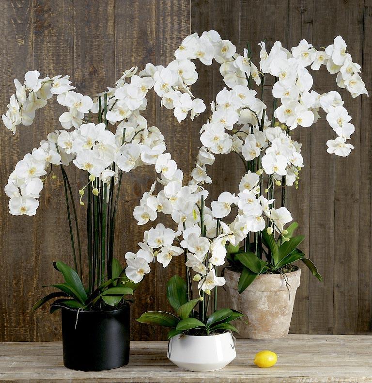 Orquídies