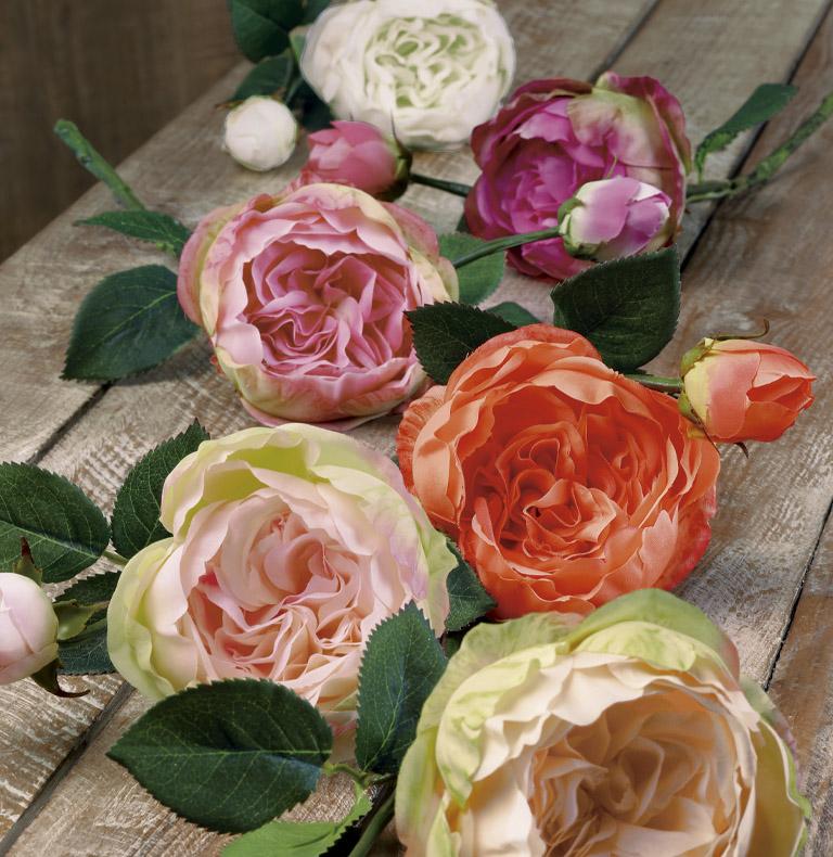 roses tija curta