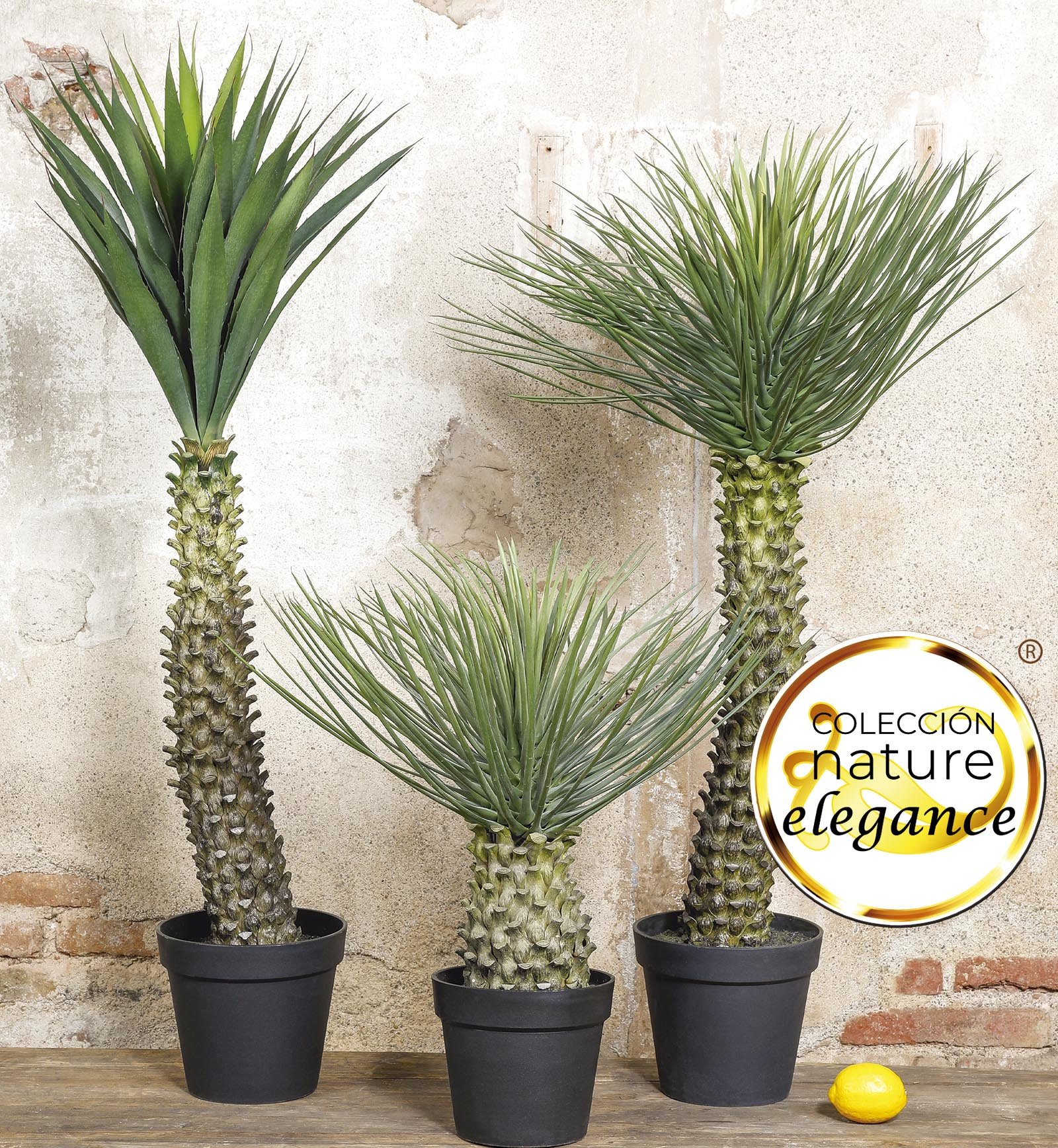 nature elegance plantes