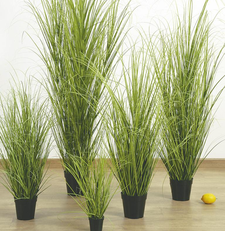 col·lecció grass
