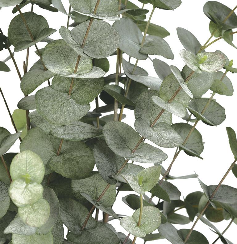 fulles i verds